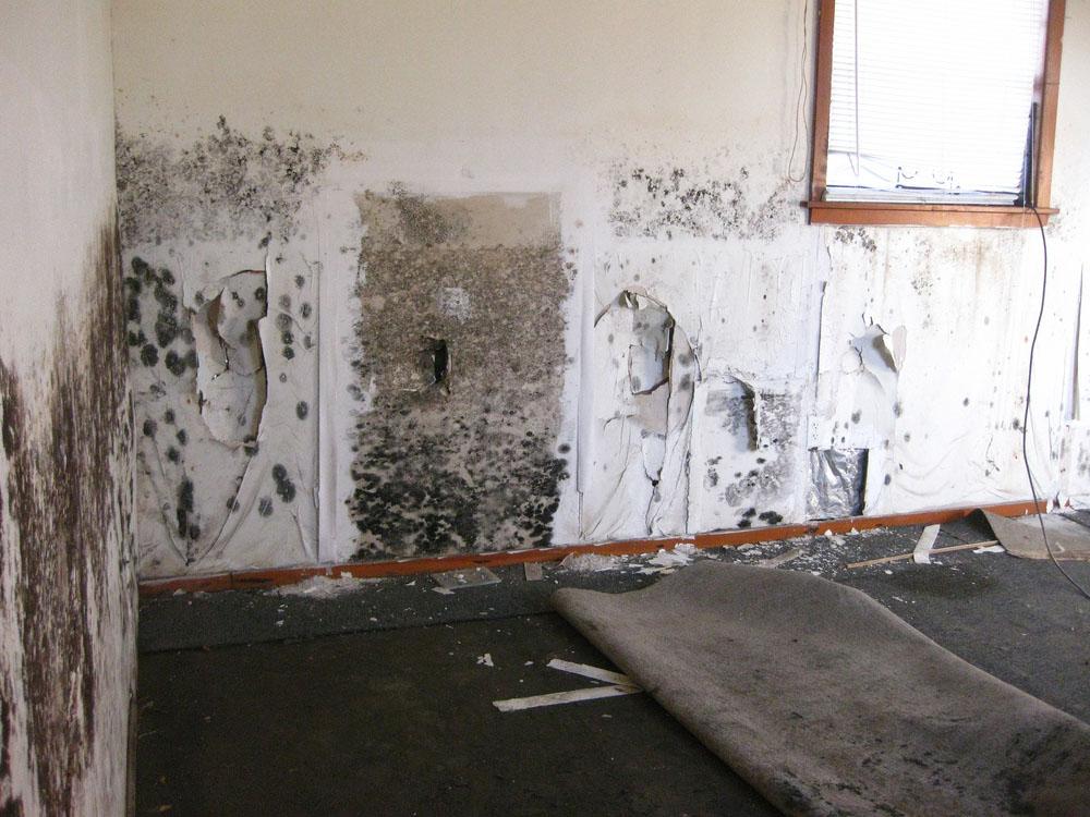 Mold Infestation after improper water removal